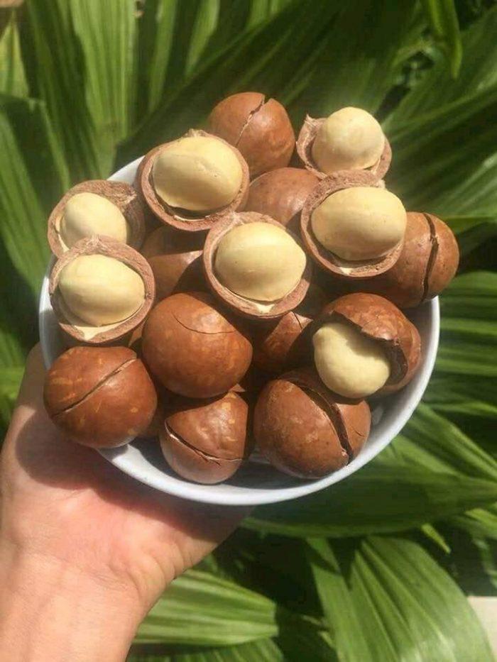 sản phẩm của Hạt mắc ca đang được đặt hàng rất nhiều tại sweetiehouse. trên thị trường có rất nhiều đại lý cung cấp hạt mắc ca cho người tiêu dùng trong nước như hạt mắc ca trung quốc, hạt mắc ca úc nhưng hạt mắc ca việt nam được ưu chuộng nhất và chính là sản phẩm được hiệp hội nông nghiệp việt nam khuyên dùng
