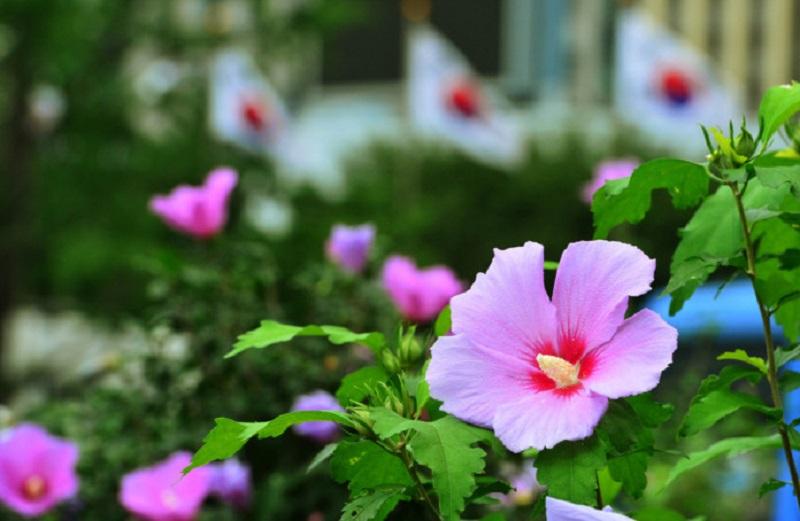 Quốc hoa Hàn Quốc